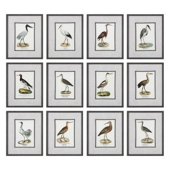 Uttermost Seashore Birds 22.25' Prints in Distressed Black Frame (S/12)