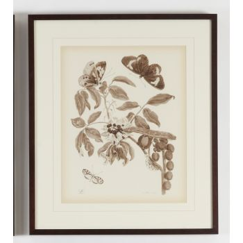 Chelsea House Nature Study/Sepia-II Wall Art